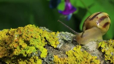 Snail on a bright branch. Macro. Real time — Vídeo de Stock