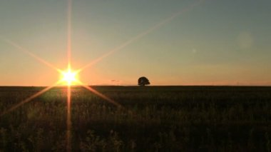 Sunset    in field with  lonely  tree. PAL  Timelapse — Stock Video