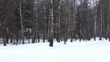 Winter landscape in the wood. PAL — Stock Video