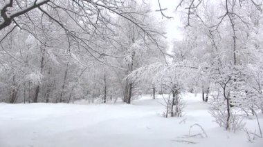 Winter forest — Vídeo Stock