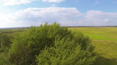 Flight over a tree in the field . Aerial landscape — Vídeo stock