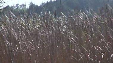 Cane on a wind close up — Vídeo stock