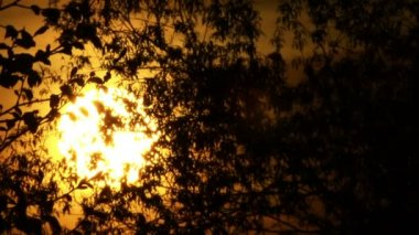 Sunrise   of yellow sun and tree.   time lapse clip — Stock Video