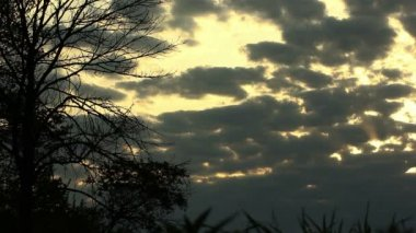 Clouds with  yellow sky and  tree. Time lapse — Vídeo de Stock
