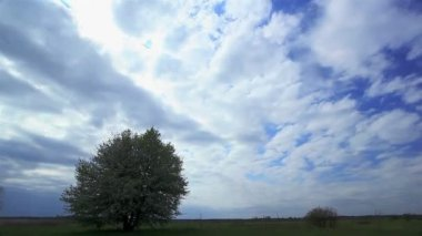 Beautiful clouds and  tree. Time lapse — Stock Video