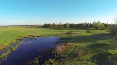 Beautiful 55 second  fly  over  morning  field and  wood. Aerial — Stock Video