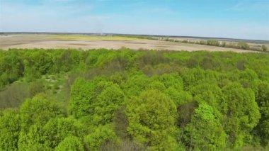 Slow flight over  green wood .Aerial — Vídeo stock