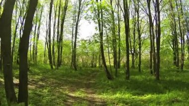 Beautiful summer wood. Slow flight. Aerial movement — Stock Video