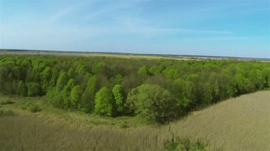 Landscape with  wood,  cane and blue sky. Aerial summer — Stock Video