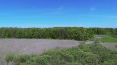 Over  bog with  cane and  wood. Aerial  spring  top landscape — Vídeo stock