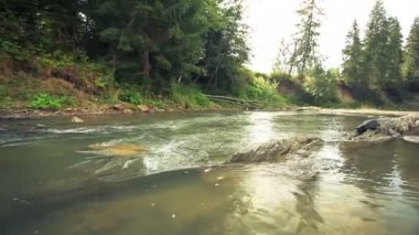 Small pure river with stones. Panorama — Vidéo