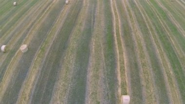 Flight over  slanted field with haycocks. Aerial top view — Stock Video