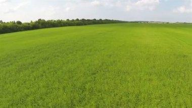 Fast Flight over  green field . Aerial  rural  landscape — Vídeo stock