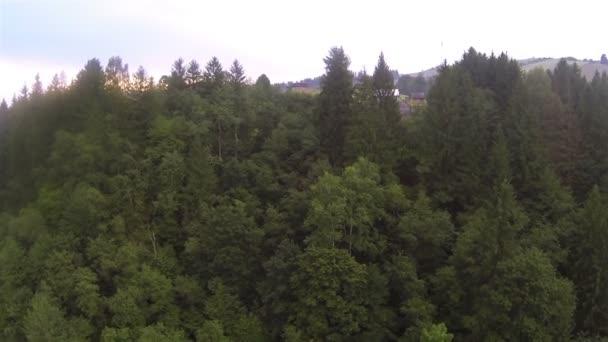 Laderas con árboles en día nublado. Aéreo — Vídeo de stock