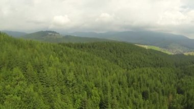 Flight over trees in  mountain wood. Aerial  shot — Stockvideo