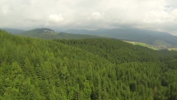 Vuelo sobre árboles de madera de la montaña. Toma aérea — Vídeo de stock