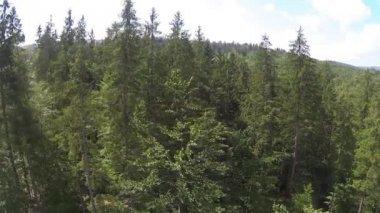 Боковой полет по деревьям в горах. — Стоковое видео