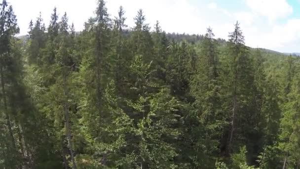 Vuelo lateral encima de árboles en las montañas. — Vídeo de stock