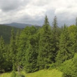 Group of trees on hill in mountains. Aerial  shot, rear fly — Stock Video #64420535