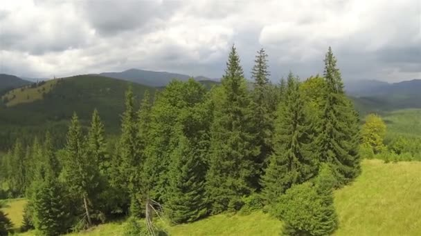 Grupo de árboles en colina en las montañas. Tiro aéreo, vuelo trasero — Vídeo de stock