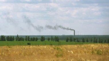 промышленные трубы с дымом и областью пшеницы. пейзаж, — Стоковое видео