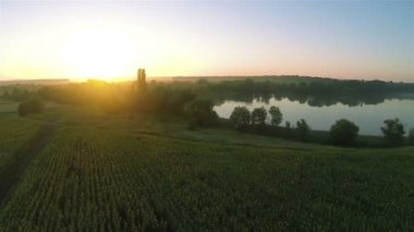 Beautiful fields  with lake and sunrise.  Aerial  fly — Stock Video