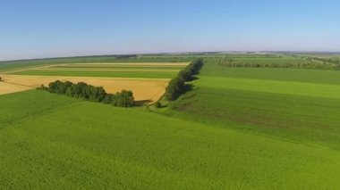 Panorama of  rural landscape with green fields of crops. Aerial — Vídeo stock