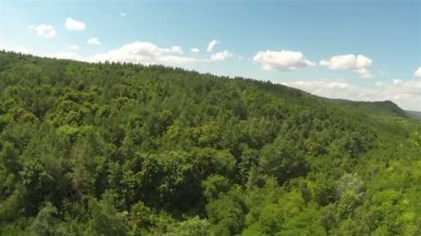 Green wood on hill .Aerial — Stock Video