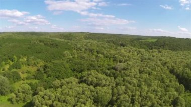 Wood  on hill .Aerial — Stock Video