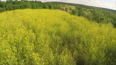 Beautiful flight over  yellow grass. Aerial  summer time — Wideo stockowe