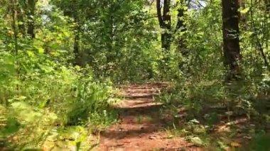 Gloomy wood, movement, as animal POV — Stock Video