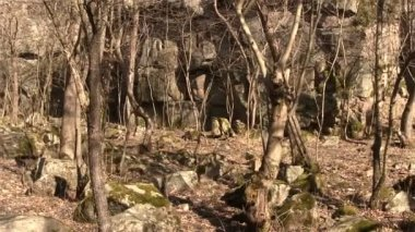 Panorama of trees and boulders in spring. Landscape — Stock Video