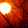 Sun in  red sky through tree branches.  Sunset Time lapse — Stock Video #64849173