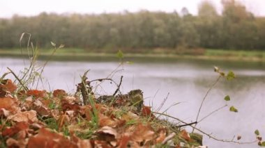 Red autumn leaves and river. Dolly shot  in windy day — Stockvideo