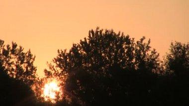 Orange Sunrise  through trees.  . PAL Time lapse — Stock Video