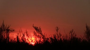 Grass and bush in field and   red sunrise. PAL Time lapse — Stock Video