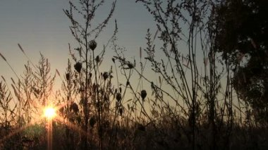 Grass and bush in field and sunrise. PAL Time lapse — Stock Video