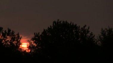 Sun through trees. Sunrise . PAL Time lapse — Stock Video