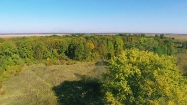 Beautiful yellow and green trees in wood. Aerial  shot  fly  over wood — Stock Video