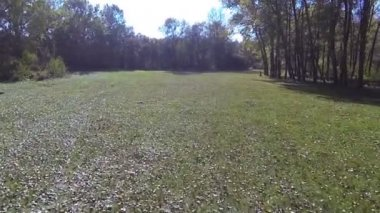 Flight over  autumn  solar glade in the wood. Aerial  shot — Stock Video
