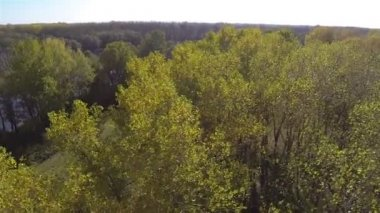 Flight over  autumn  yellow tops of trees. Aerial  shot — Stock Video