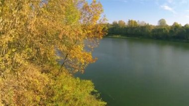 Autumn bright landscape with  river and wood. Aerial  shot — Stockvideo