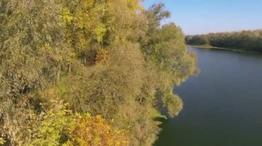 Fly up over autumn woos and river. Aerial  shot — Wideo stockowe