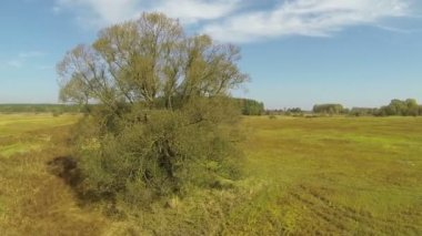 Slow fly over  tree on  meadow. Aerial  shot in sunny day — Stock Video