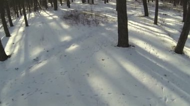 Snow in winter wood. Aerial landscape — Vídeo stock