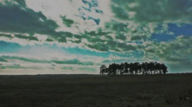 Clouds in field with trees. Timelapse — Stockvideo