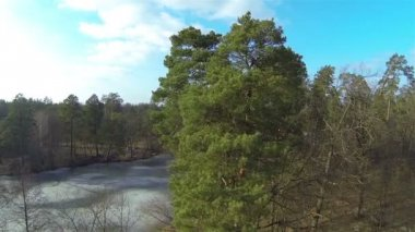 Slow fly over trees and  lake in winter. Aerial — Wideo stockowe