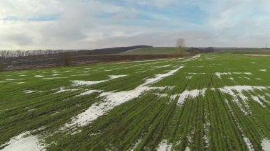 Flight over  green field  . Aerial landscape — Stock Video
