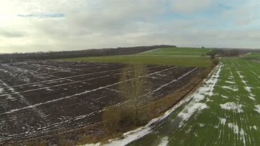 Green and not sowed field in rural areas. Aerial landscape — Stock Video
