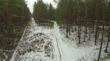 Beautiful flight over trees in  winter wood..Aerial  view — Stock Video